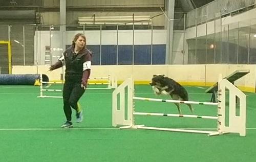 A dog jumping over an agility jump