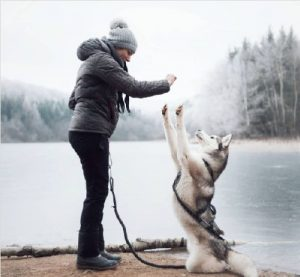 Dog standing on two paws infront of a lake.