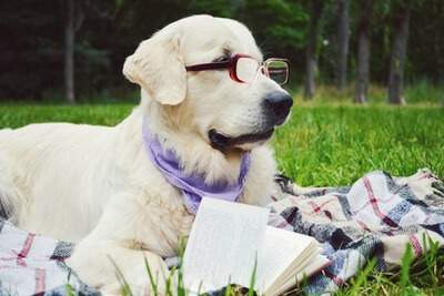 A dog wearing glasses and reading a book learning about dog training.
