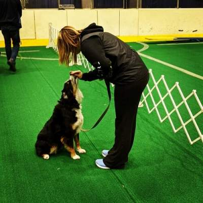 Colby Lehew rewarding her dog Loki outside of the agility ring.