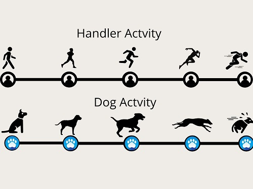 Activity rating for dogs and handlers