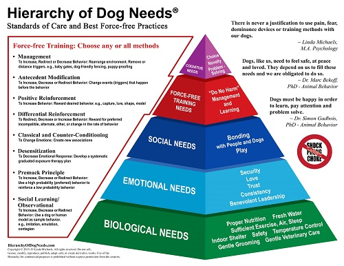 What Does A Dog Need Hierarchy Chart