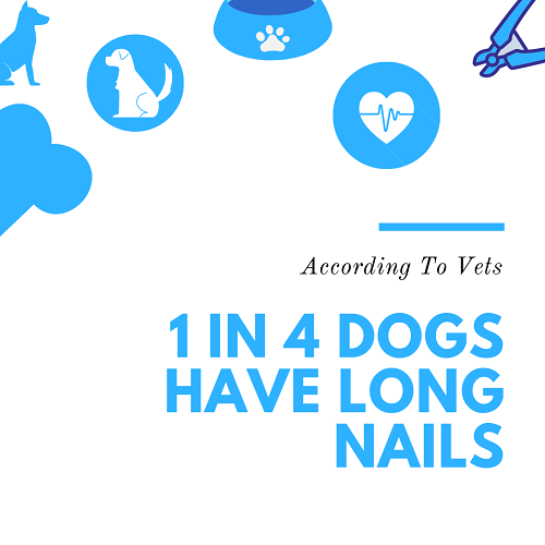 1 in 4 dogs have long nails