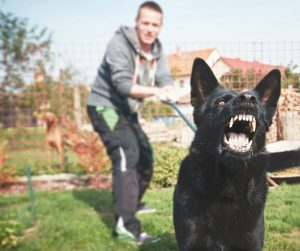 Leash Reactivity In Dogs